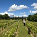 Green Vineyard Walk towards Mt Ventoux