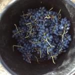 grapes bucket 'Seau!'