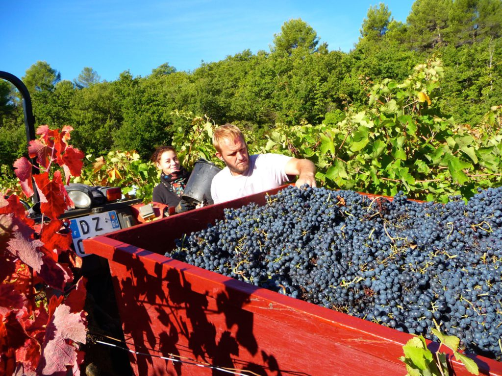 A trailer full of syrah